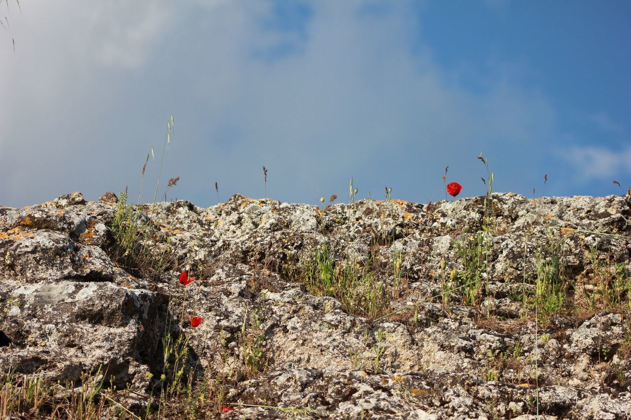 Low Angle View Of Poppies Growing On Rock Formation