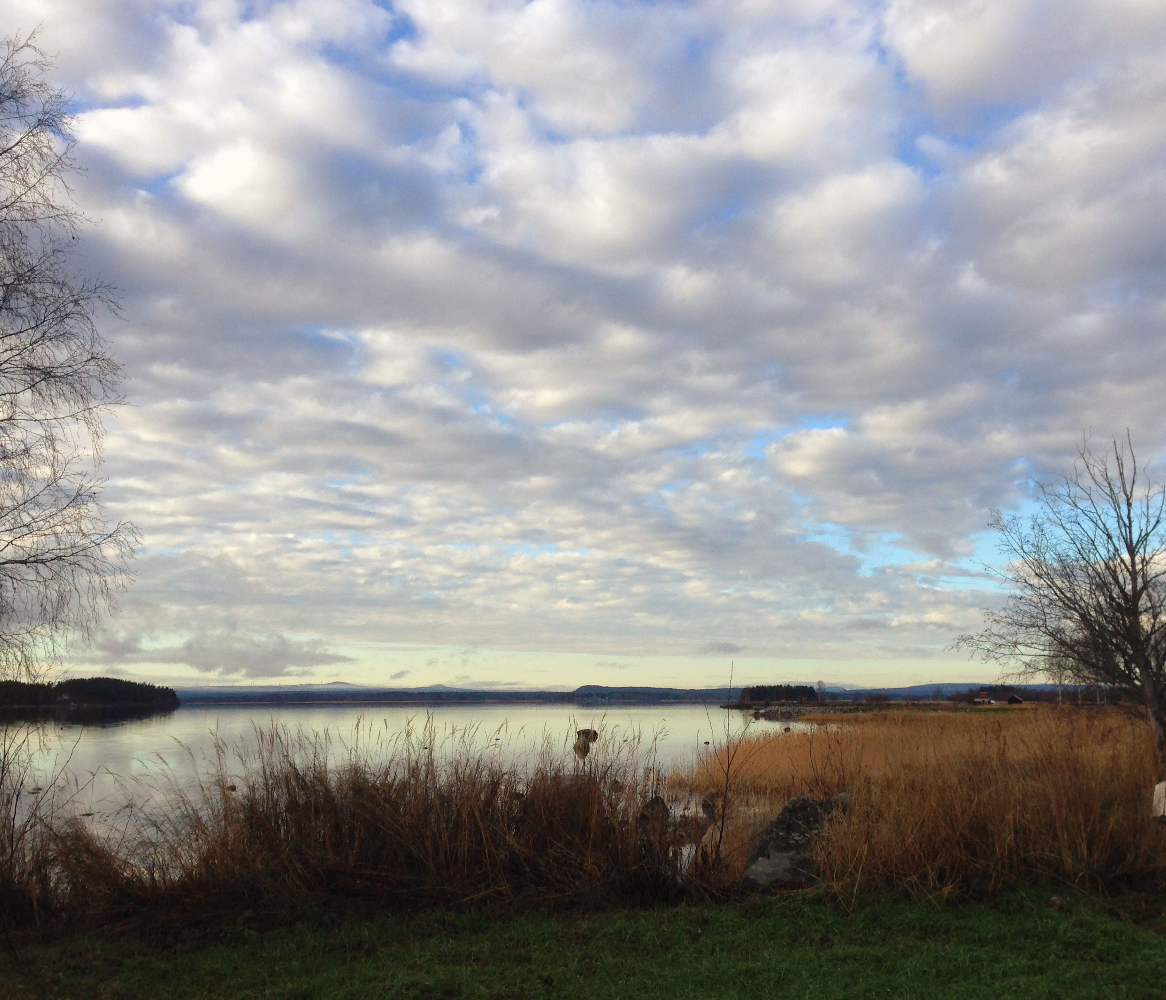 sky, tranquil scene, tranquility, water, cloud - sky, scenics, cloudy, grass, beauty in nature, lake, nature, cloud, landscape, field, tree, idyllic, plant, non-urban scene, growth, lakeshore