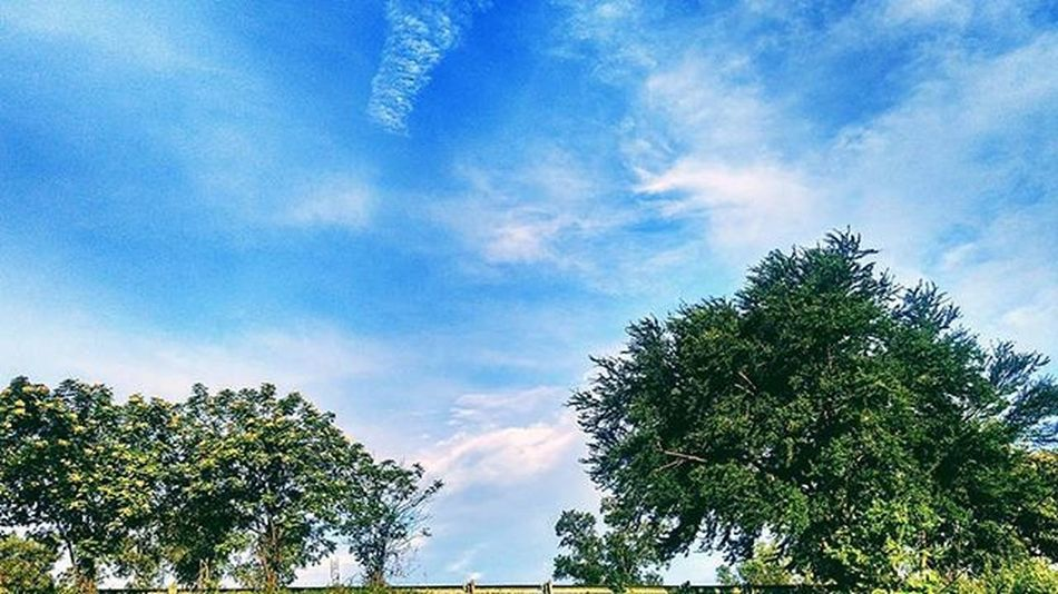 tiap hari lewat sini klo ngampuss pengen moto ini, kesampean juga 😆😆😆 Way Street Sky Bluesky Green Threes Nature View Likeforlike Like4like Goodview Goodangel Good Goodtime VSCO Vscocam Vscofilter Happy Awesome Great Mobilephotography Phonegraphy Xiaomi Redmi2camera Xiaomiphotography mifanssemarang