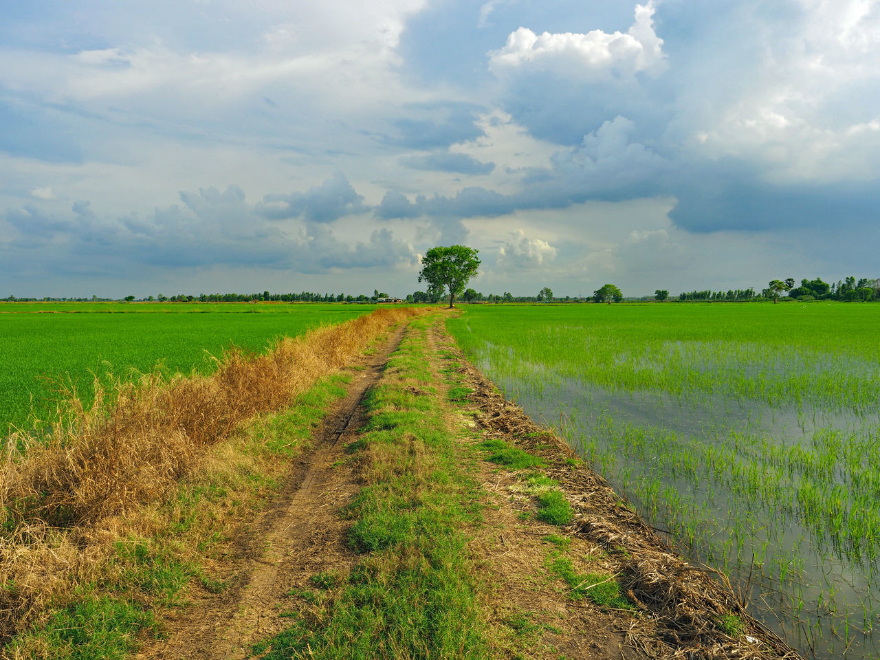 Agriculture Beauty In Nature Cereal Plant Cloud - Sky Crop  Cultivated Land Day Farm Field Grass Green Color Growth Landscape Nature No People Outdoors Plough Plowed Field Rural Scene Scenics Sky Tire Track Tranquil Scene Tranquility