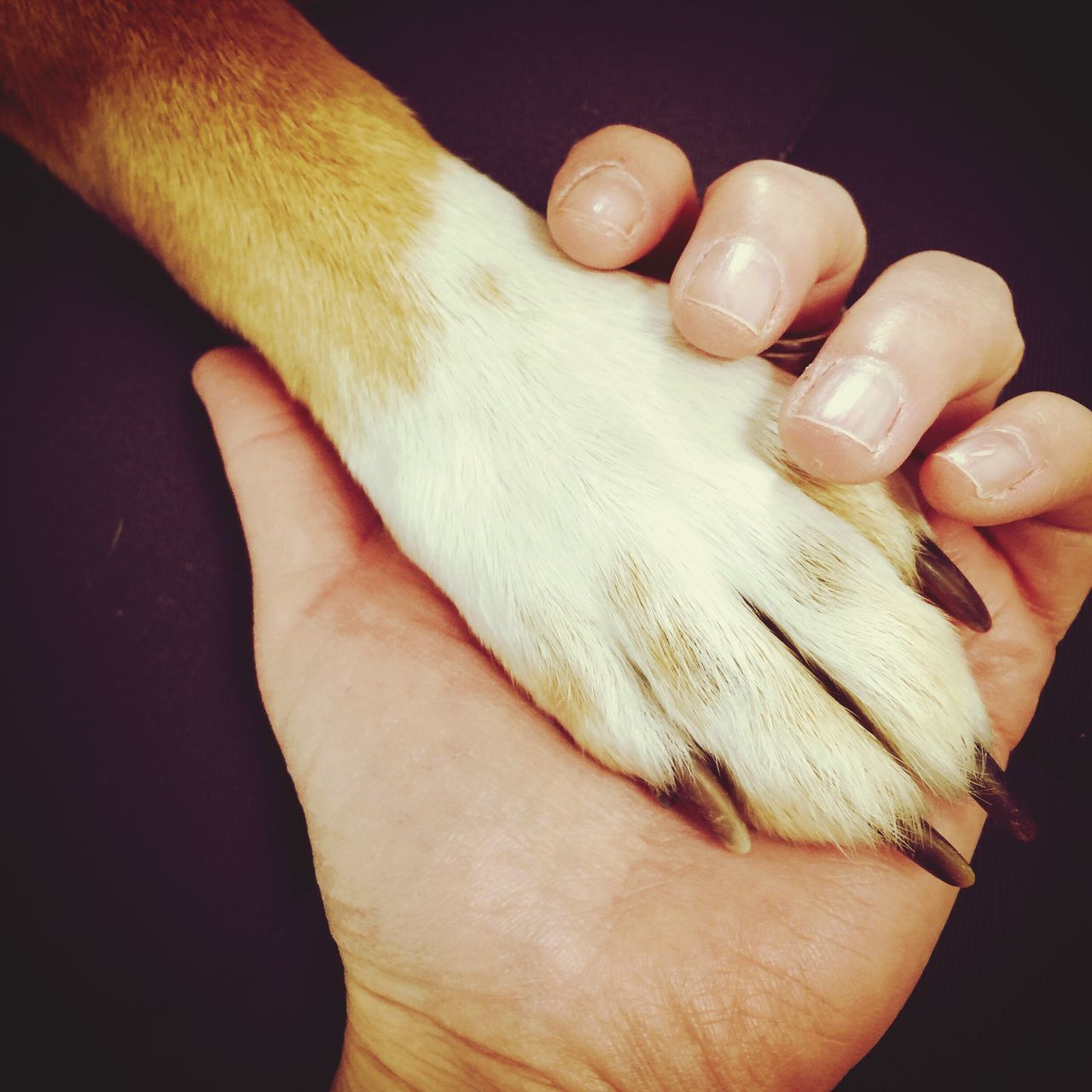 human hand, human body part, pets, domestic animals, one animal, domestic cat, one person, real people, mammal, holding, indoors, feline, close-up, men, day, people