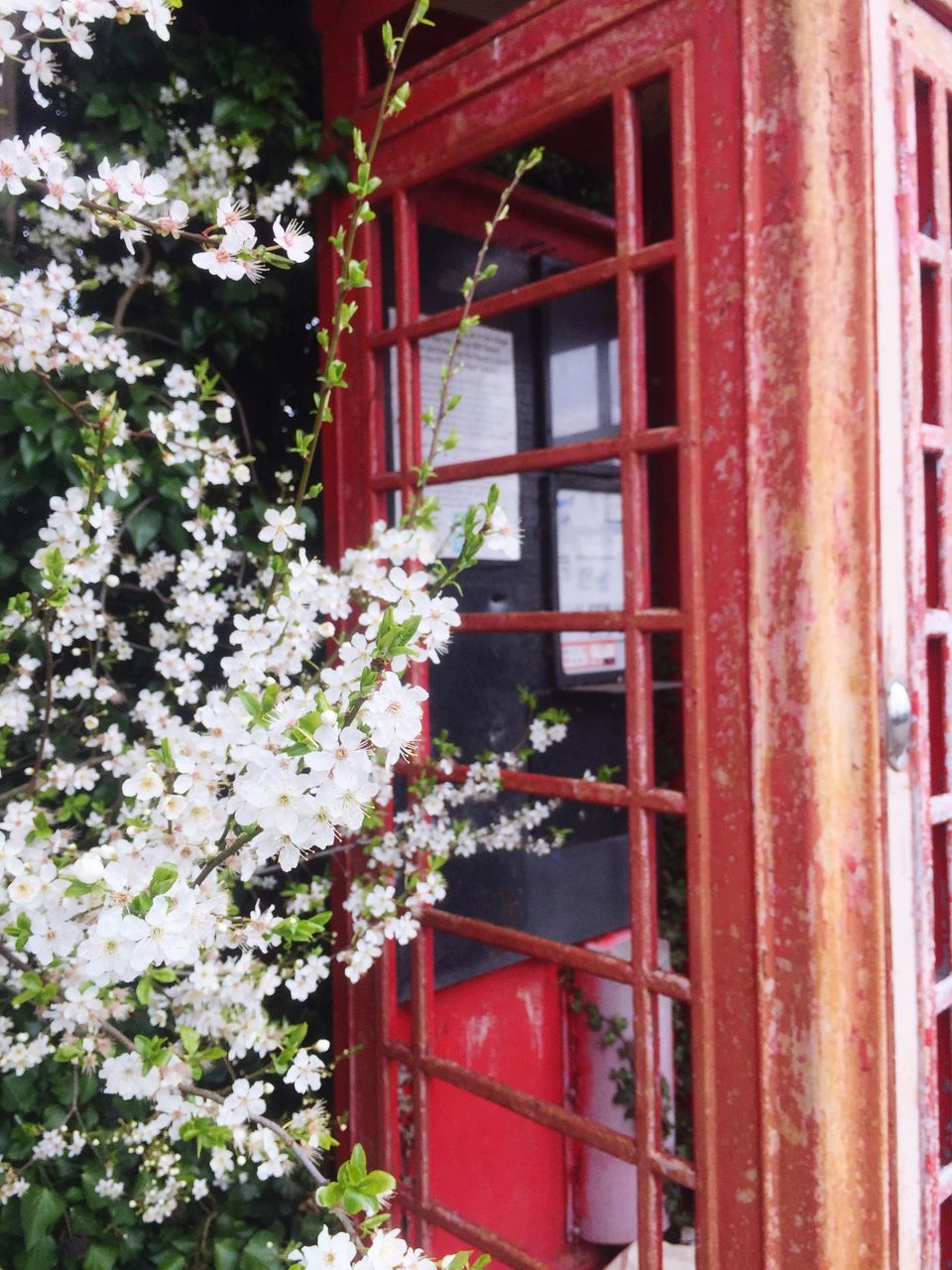 window, red, flower, architecture, building exterior, day, built structure, plant, outdoors, no people, nature, growth, fragility, beauty in nature, window box, leaf, tree, branch, close-up, freshness