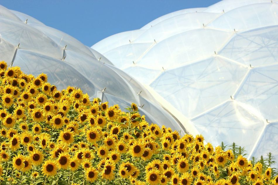 The Eden Project Flowers Travel Exploring England