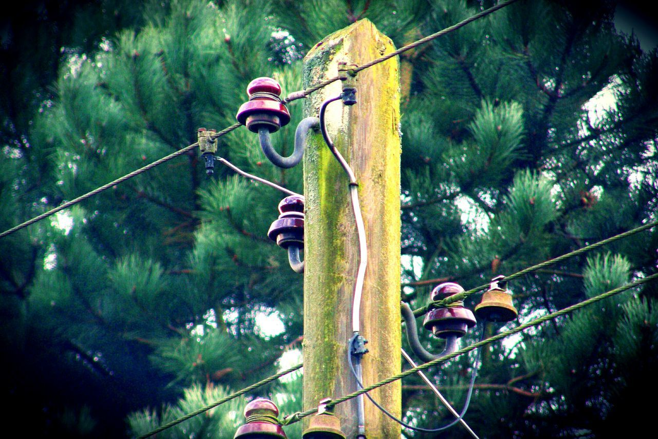 tree, rope, cable, day, outdoors, green color, hanging, helmet, plant, forest, adventure, nature, no people