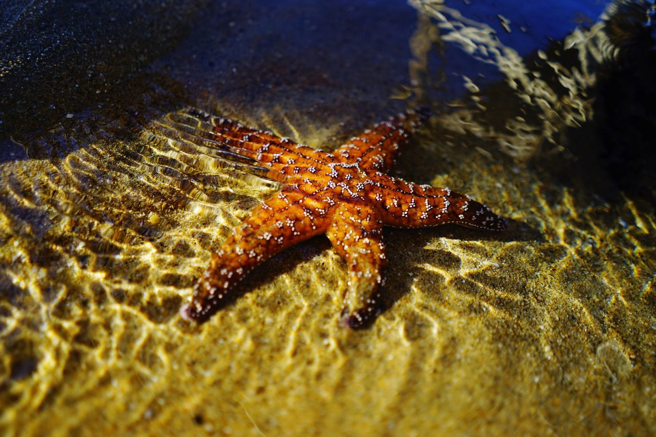 Starfish ~ Animal Themes Nature Sea Life Outdoors No People Beauty In Nature Starfish At Beach Starfish  Sony SONY A7ii 28mm Lens Full Frame