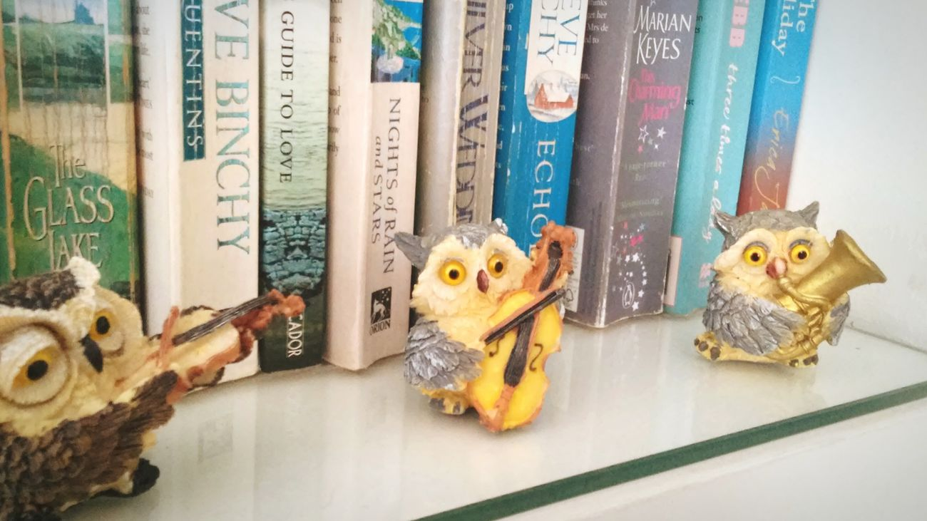 Cello Violin Tuba Owls BOOK SHELF EyeemPhotos
