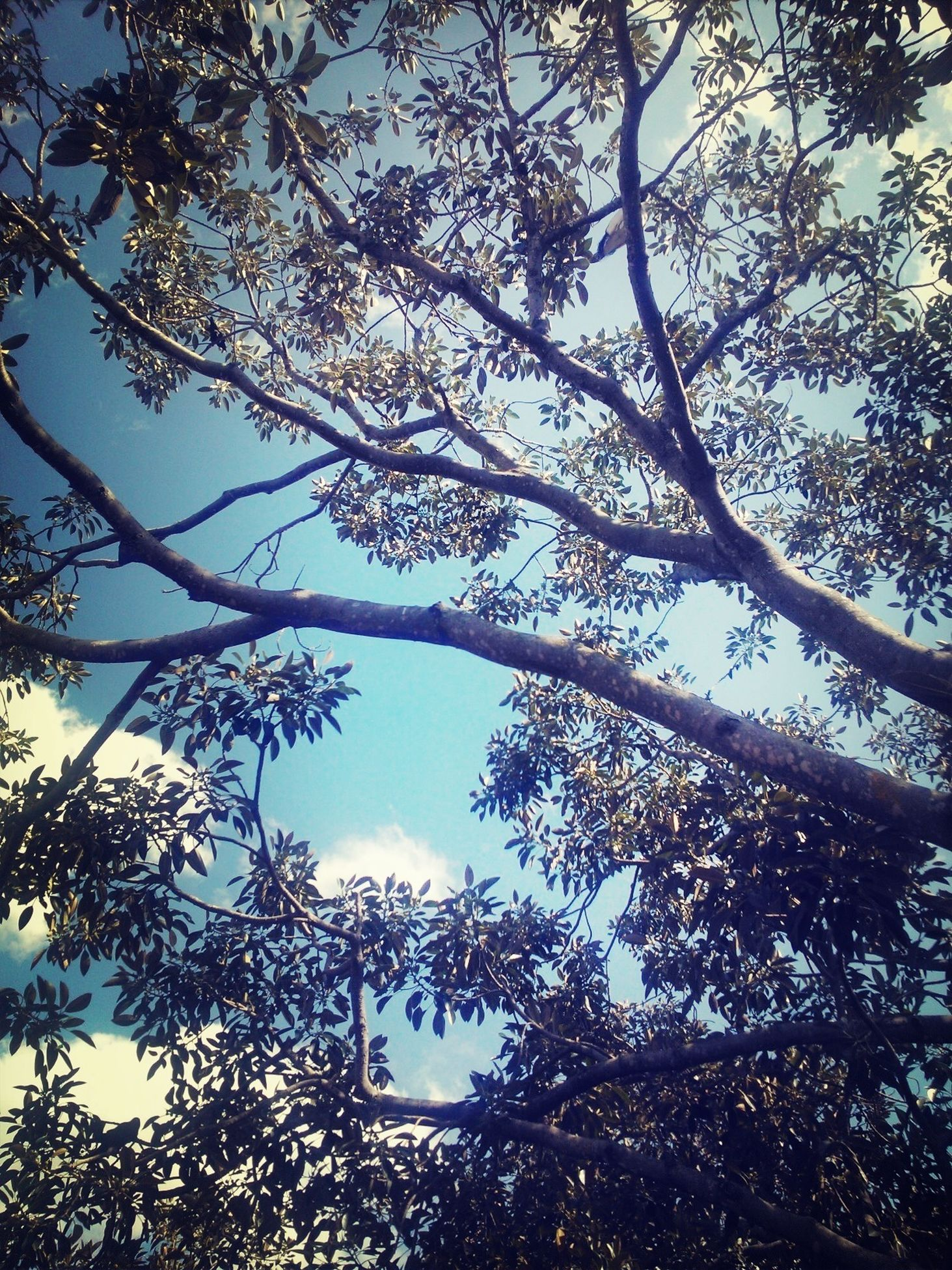 tree, low angle view, branch, growth, nature, sky, beauty in nature, tranquility, clear sky, scenics, day, outdoors, no people, sunlight, tranquil scene, leaf, tree trunk, silhouette, high section, idyllic