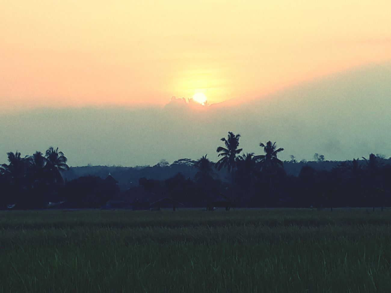 Sunset in my village... Kuninganjabar Luragung Cermai Sindangsuka Sunset Naturelovers Nature Hanging Out Hello World Photography