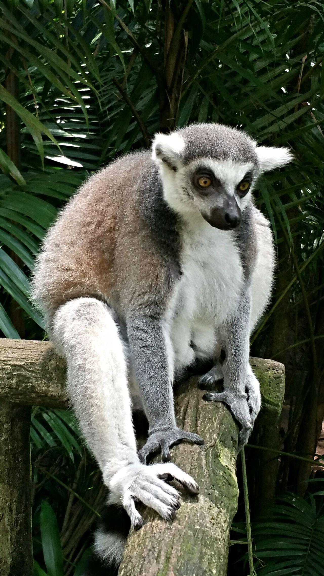 Hello there... Taking Photos Singapore Randomshot Singapore Zoological Garden Animals
