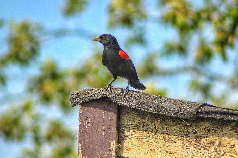 sentry Photography Bird Wildlife Nature