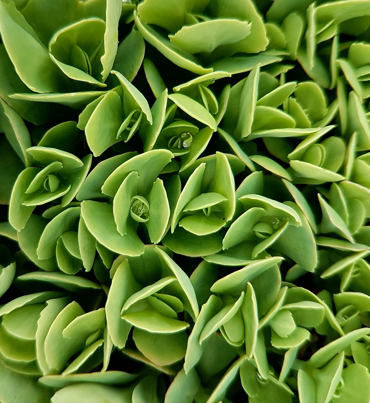 Plant Green Color Plant Patterns In Nature Surface Texture Leaf Nature Green Texture Leaves Botany Plant Part Pattern Garden Photography Plant Photography Green Nature Plants Collection Green Leaves Backfround Green Background Green Leaves. Garden Cover Photo Plants Freshness Green Leaves Background