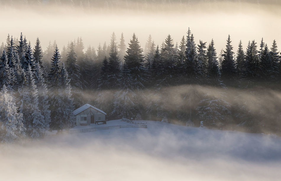 Foggy morning in the Rodnei Mountains Abstract Beauty In Nature Cold Temperature Coniferous Tree Cottage Day Fog Foggy Foggy Morning Forest House Landscape Landscape_Collection Nature No People Outdoors Scenics Snow Tranquil Scene Tranquility Tree Weather Winter