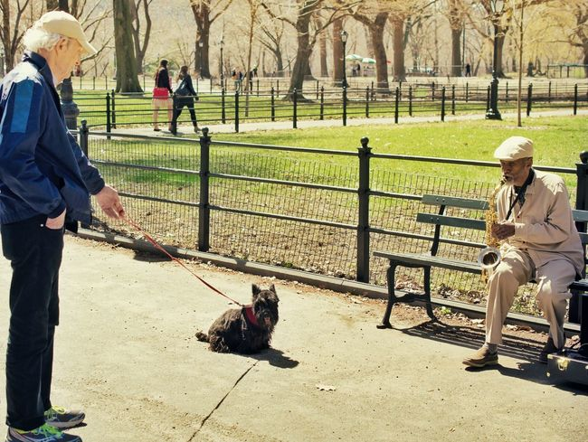This little dog stopped to listen to the music and the owner could not lead him until a musician playing the saxophone 😊 Telling Stories Differently Central Park - NYC Spring Time Music Music Is My Life Retro Dog Listening To Music Outdoor Photography Outdoor Park Life Musicians People Walking Around Usa Trip 2013 Up Close Street Photography Rest & Relax Sunny Day Be Happy, Dont Worry✨ Be Happy People Watching My Favorite Photo Cats&dogs Dog Walking Nature On Your Doorstep