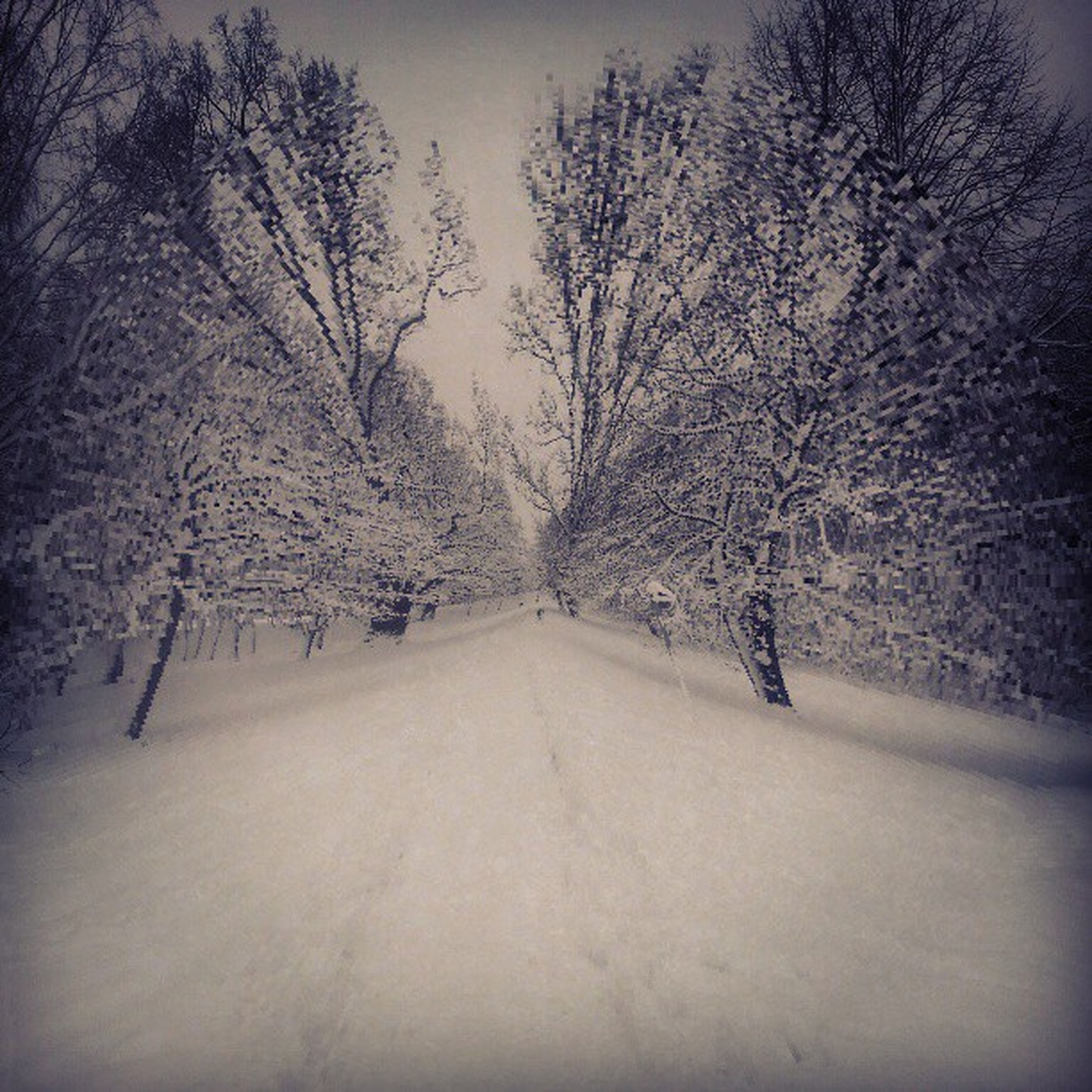 snow, winter, bare tree, tree, cold temperature, the way forward, season, weather, tranquility, tranquil scene, branch, nature, covering, beauty in nature, landscape, scenics, diminishing perspective, road, covered, non-urban scene