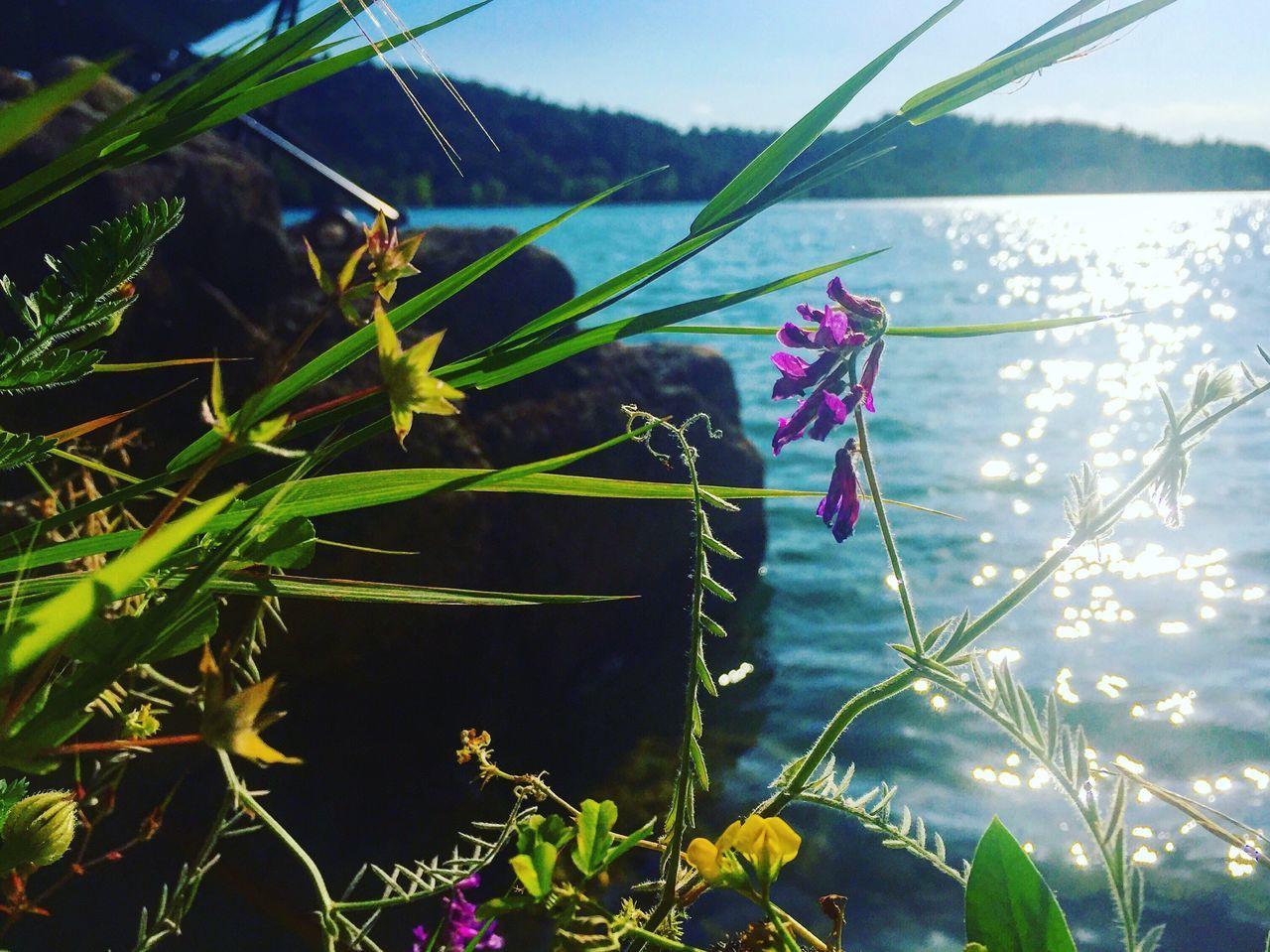 Lac De Saint Cassien Peace And Quiet Landscape #Nature #photography Lake Sunreflectionsinwater Flower