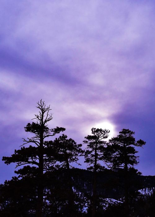 Sunset Silhouettes Tree Sky Silhouette Cloud - Sky Beauty In Nature Nature Tranquility No People Scenics Outdoors Treetop Growth Winter Wintertime Sunset_collection Tree Trunk Mountain Mountains Mt Charleston Nevada