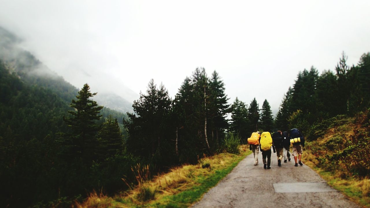 People And Places Tree Walking Road The Way Forward Transportation Full Length Men Rear View Tranquil Scene Togetherness Mountain Tranquility Nature Day Person Scenics Non-urban Scene Country Road Remote Tourism