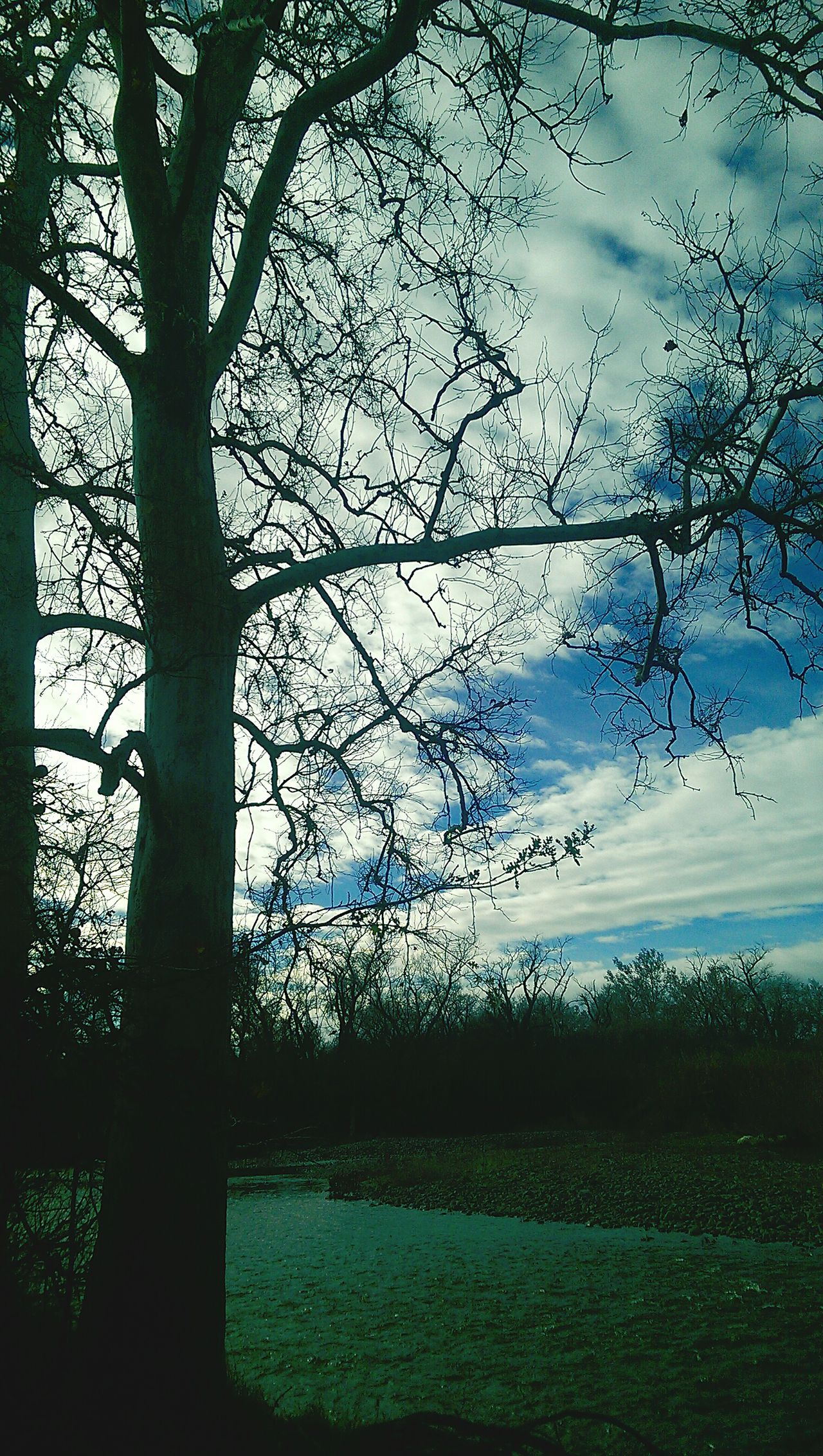 Beautiful Norcal Norcal Hugging A Tree Sycamore Treepics SkyPics Tree_collection  Sky_collection Silhouette Down By The Creek Exploring On An Adventure Eye4photography  Nature_collection EyeEm Nature Lover