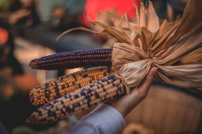 Fall vibes at a local farm. Corns Farm Farm Life Close-up Corn Day Fall Focus On Foreground Food Freshness Fruits Harvest Human Hand Loca Nature Outdoors EyeEmNewHere Fresh On Market 2017