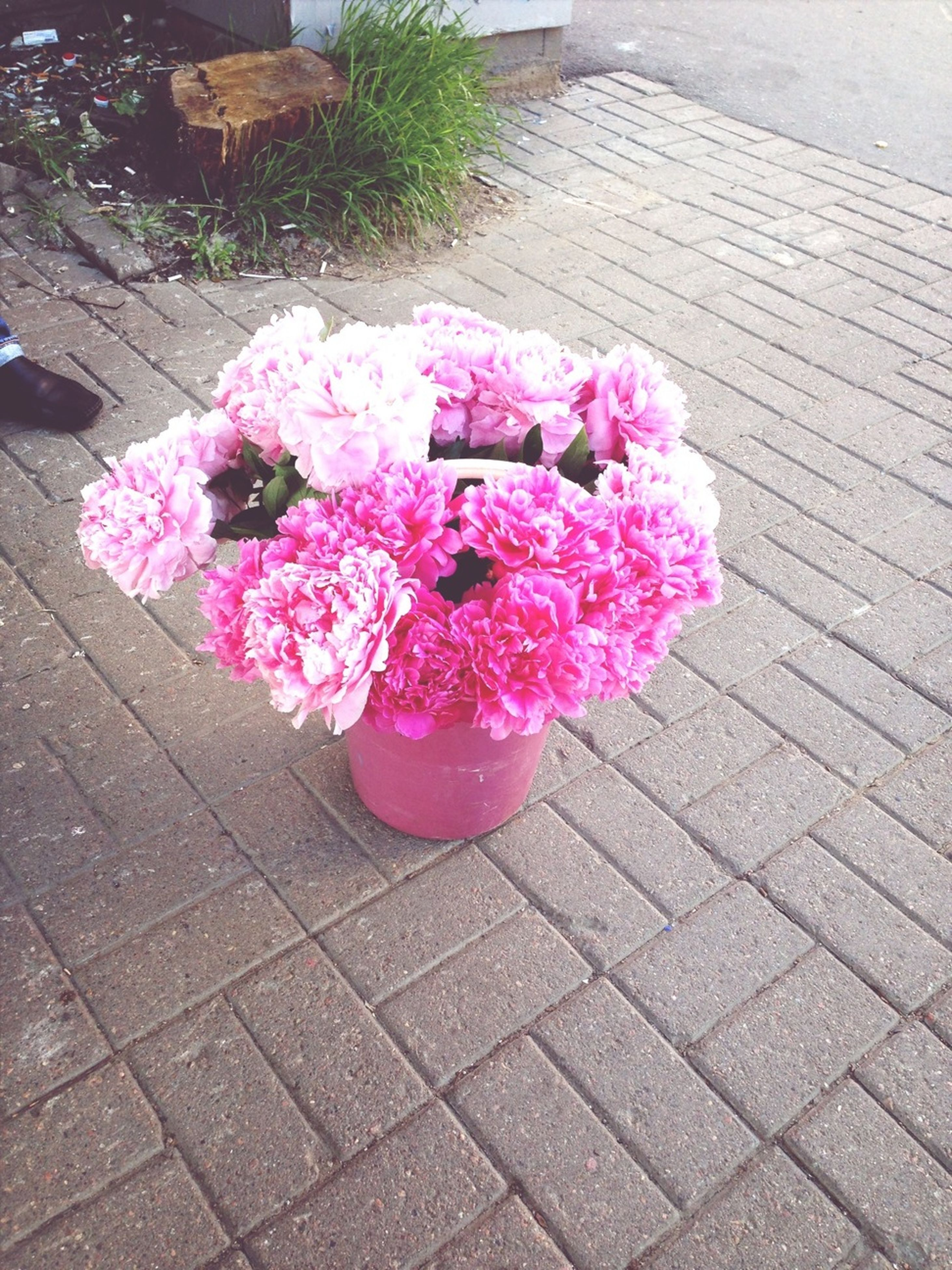 flower, pink color, freshness, high angle view, petal, fragility, paving stone, sidewalk, growth, plant, flower head, cobblestone, outdoors, rose - flower, nature, sunlight, beauty in nature, day, pink, blooming