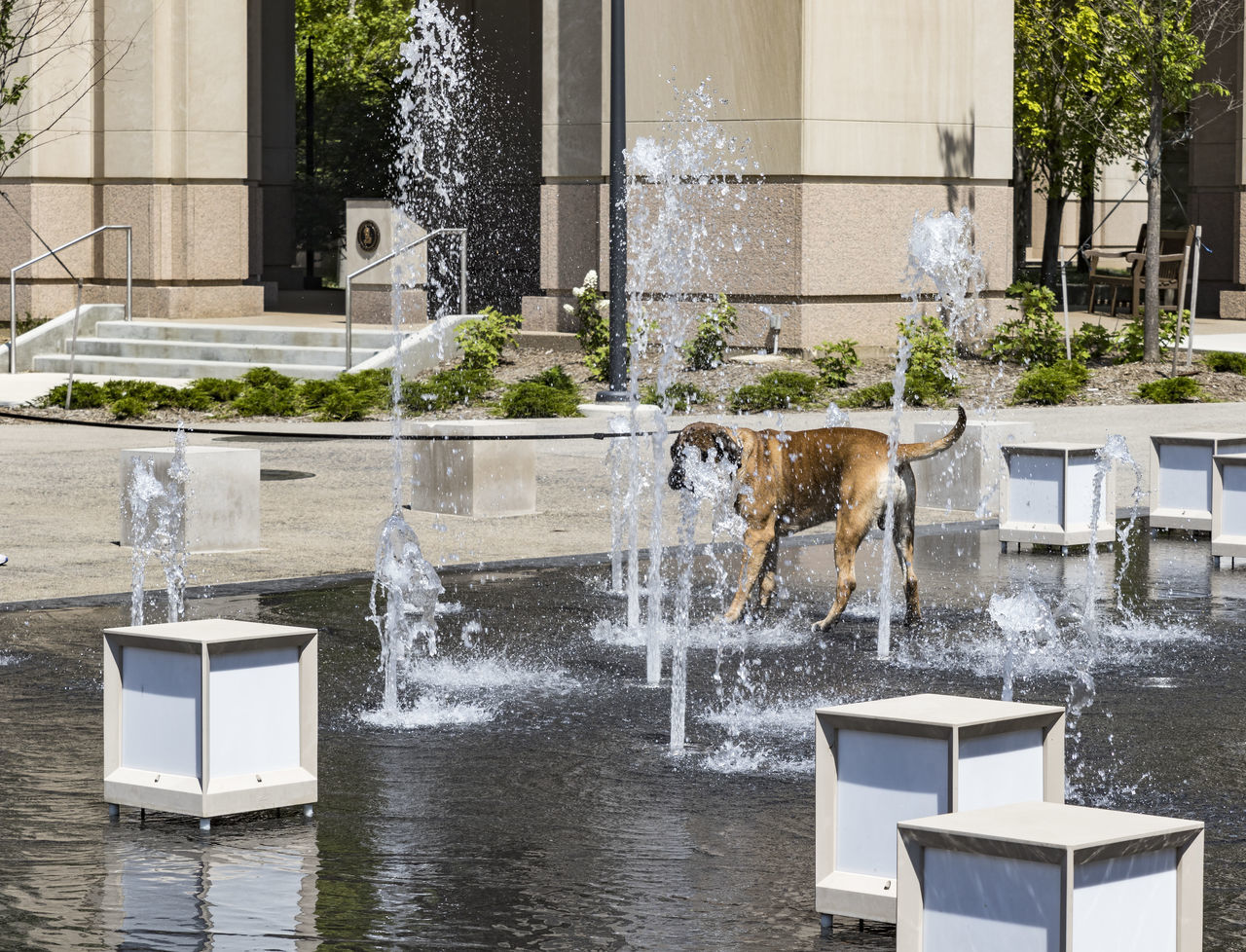 Cooling Off Animal Themes Architecture Building Exterior Built Structure Cooling Off! Day Dog Getting Cooled Off On A Hot Day Mammal No People Outdoors Pet Water Waterfront