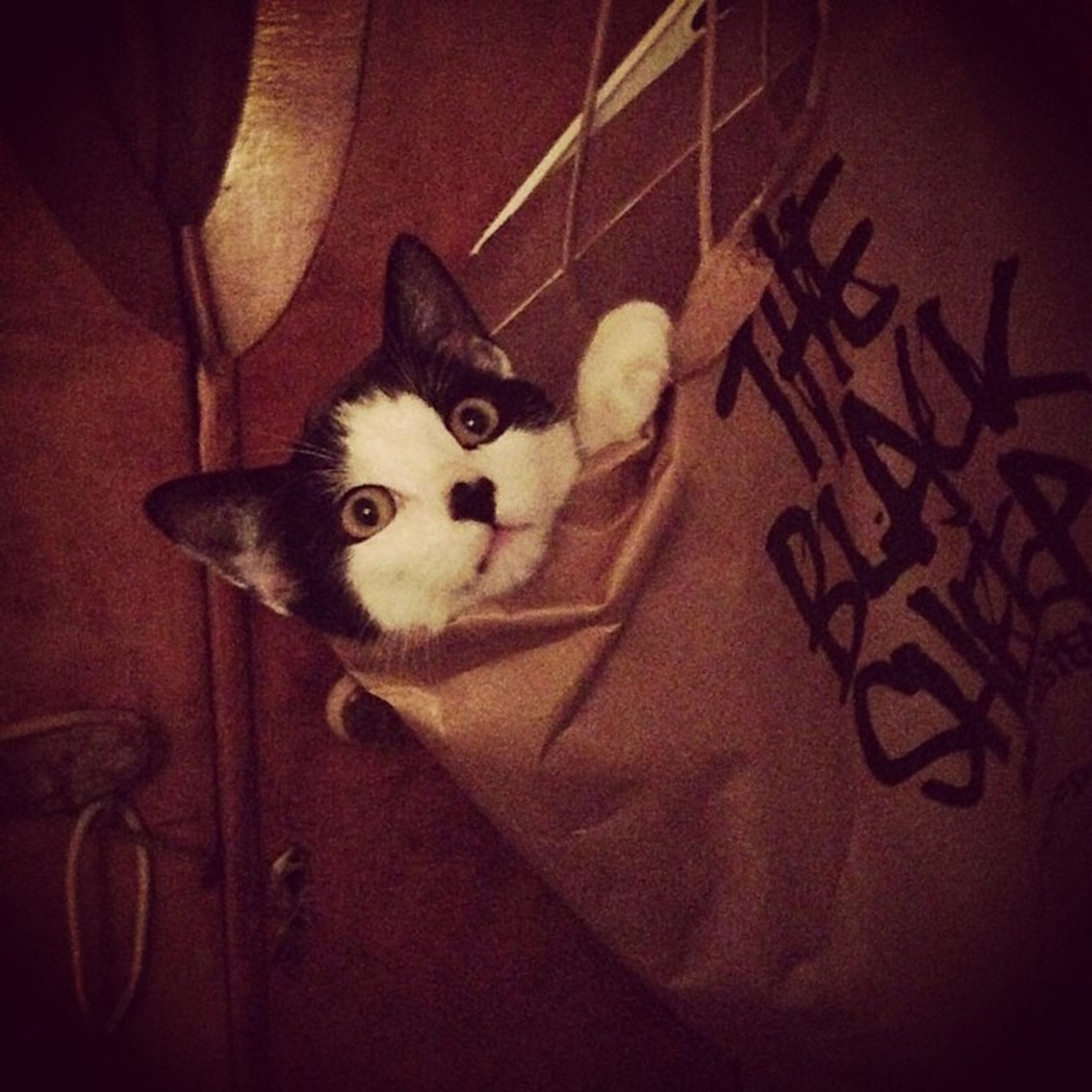 Lucy's cat 😂😂 Cat Cat Lovers Catinabag Chilling