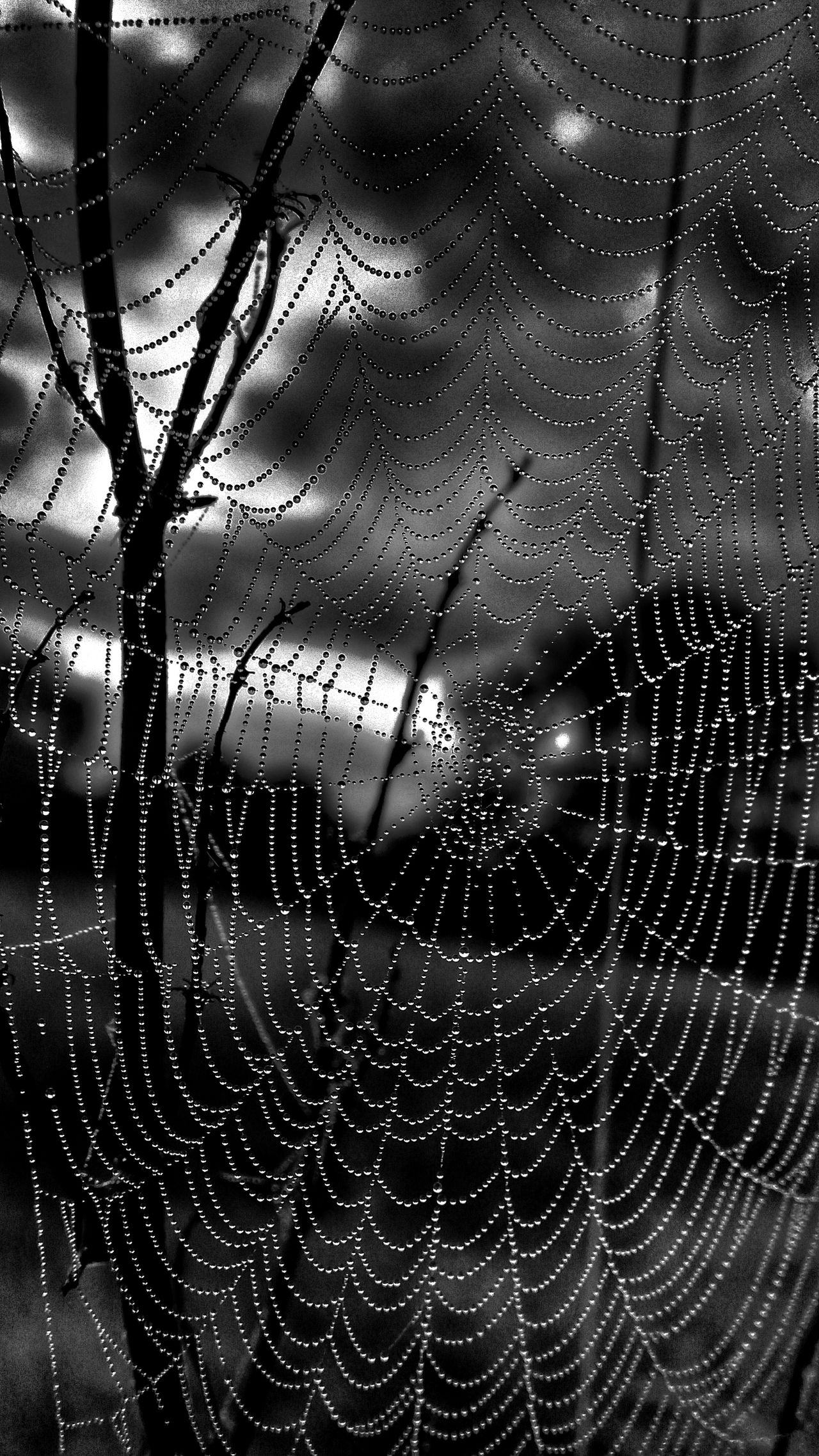 Jewels Bnw_friday_eyeemchallenge Bnw_collection Black & White Nature_perfection Pivotal Ideas Striving For Excellence Exceptional Photographs
