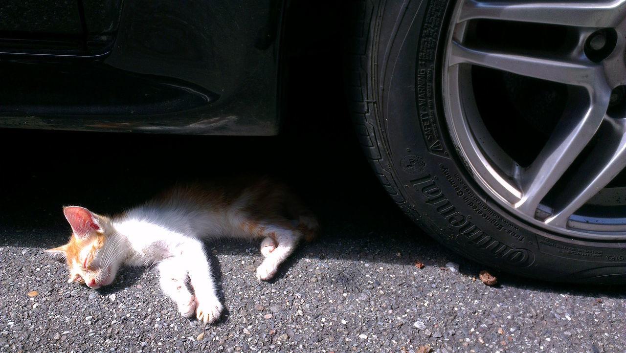 Animal Themes Cat Domestic Animals Domestic Cat Illed Land Vehicle Pets Weak