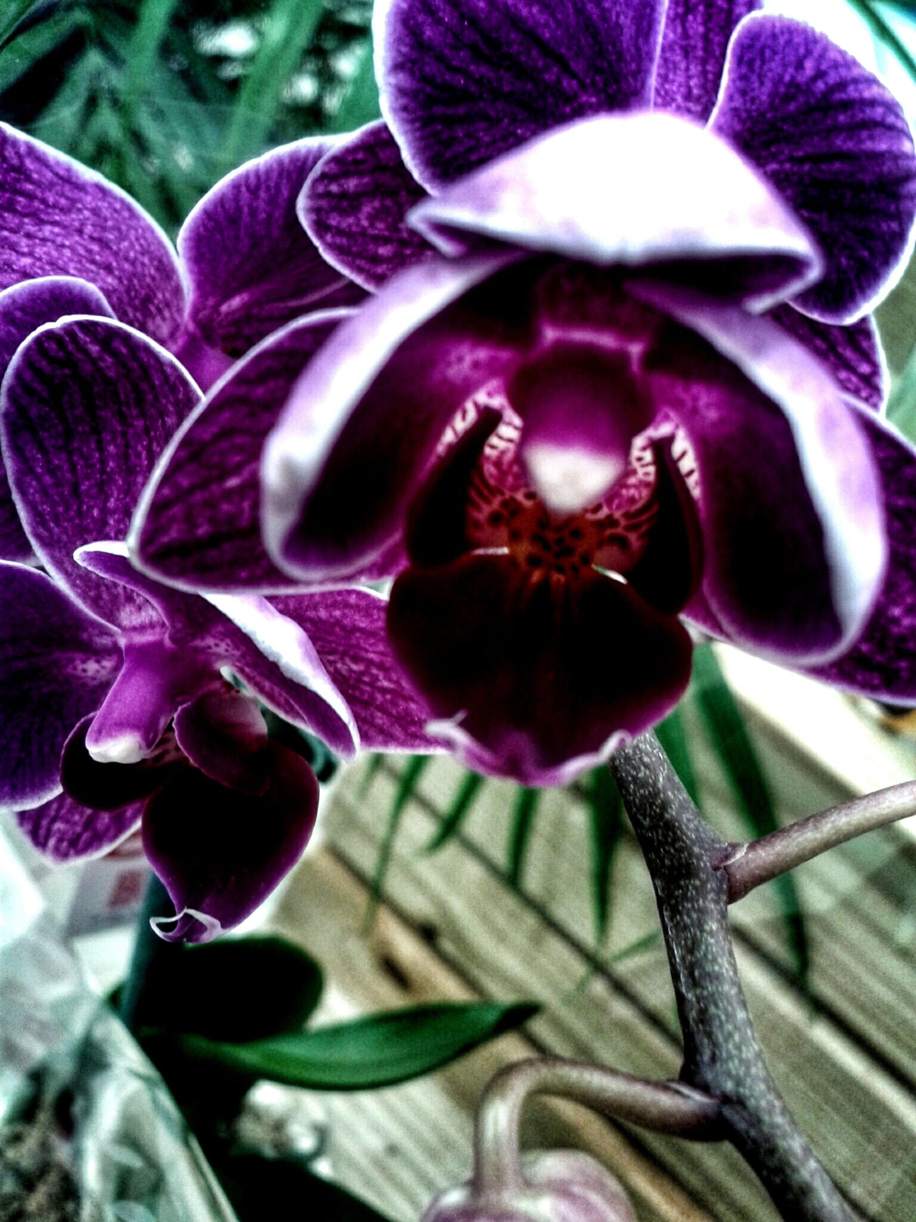 flower, purple, petal, fragility, close-up, freshness, focus on foreground, growth, flower head, beauty in nature, plant, nature, blooming, orchid, stem, outdoors, no people, day, in bloom, park - man made space