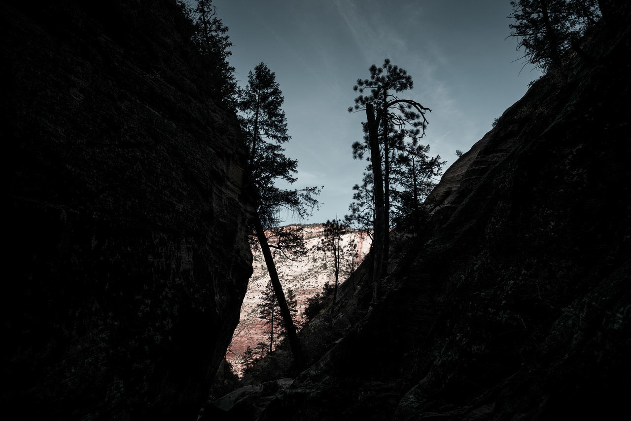 The dark side of Zion National Park, Utah, USA. Adventure Climbing Fujifilm Fujinon Hiking Landscape Landscape_Collection Landscape_photography Nature No People Outdoors Roadtrip Shadow Silhouette Travel Travel Photography Tree USA Utah Vacations Valley Wanderlust Wide Angle X-T10 Zion National Park