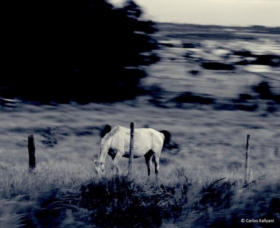 Vida selvagem Beauty In Nature No People Scenics Outdoors Animal Themes Photo Photography Eyeemphotography EyeEm Gallery EyeEm The Best Shots EyeEm Best Shots EyeEmBestPics Fotografia Eye For Photography Fotoartegram Fotoarte Fotoartistica Grass Horse Fotoart Animals Selvagem Horses Campo Campos