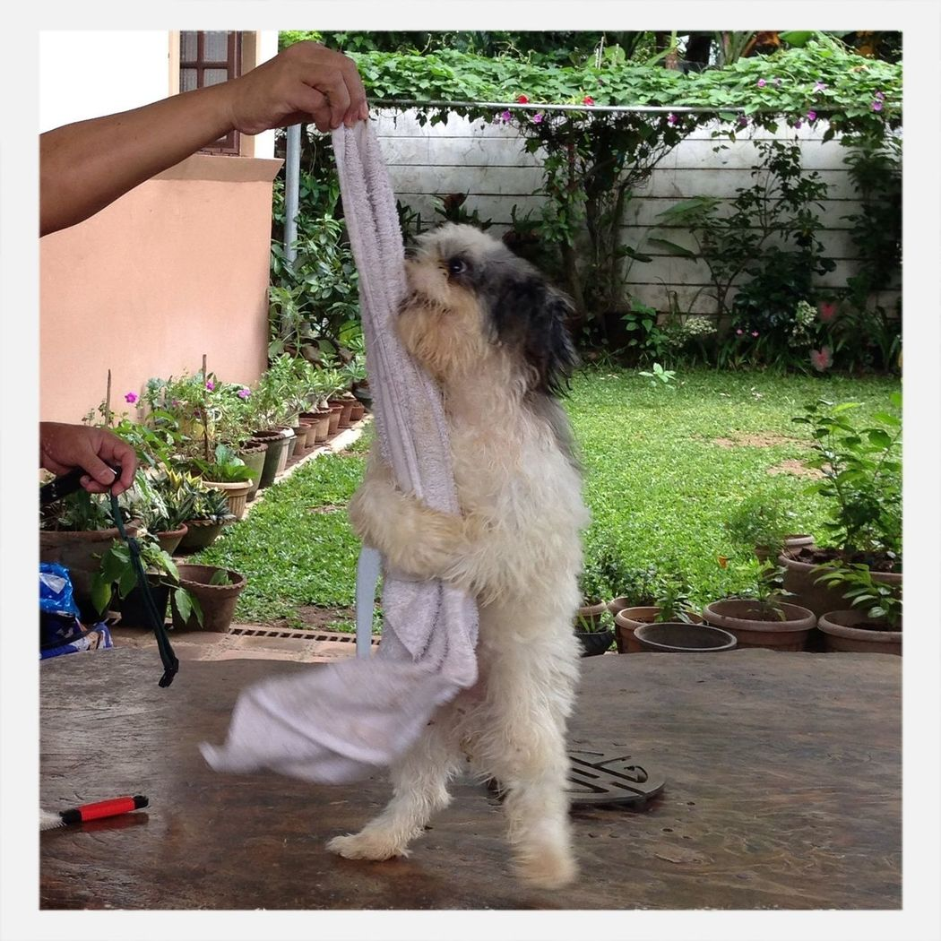 What can i say?? Our Dog just loves his towel.