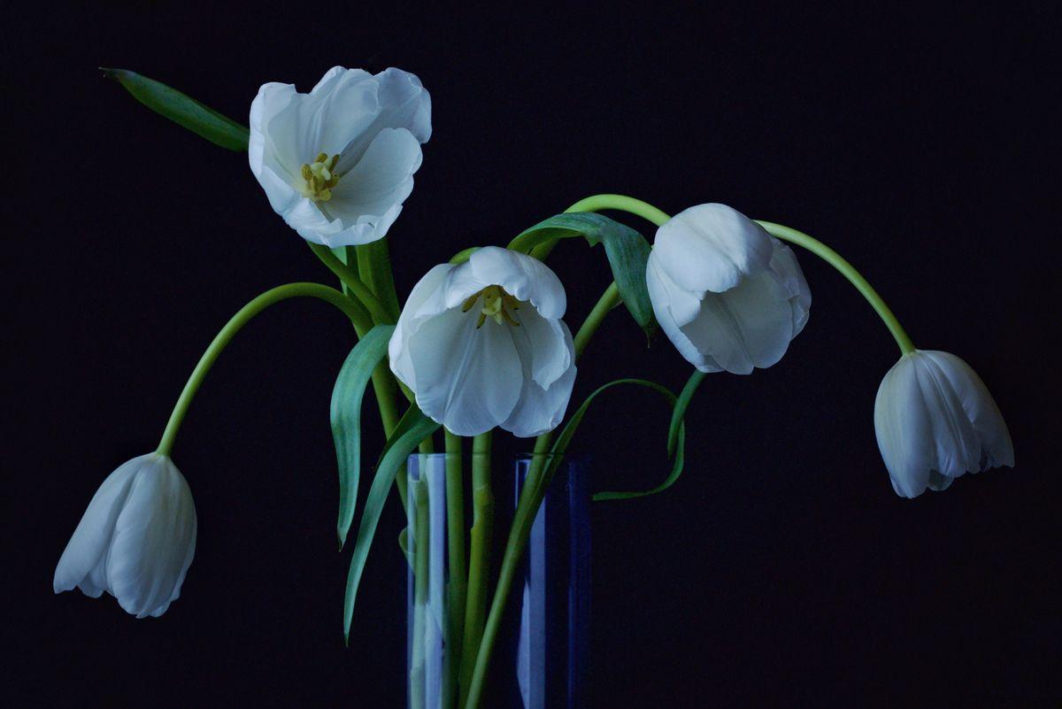 Bouquet in White Still Life