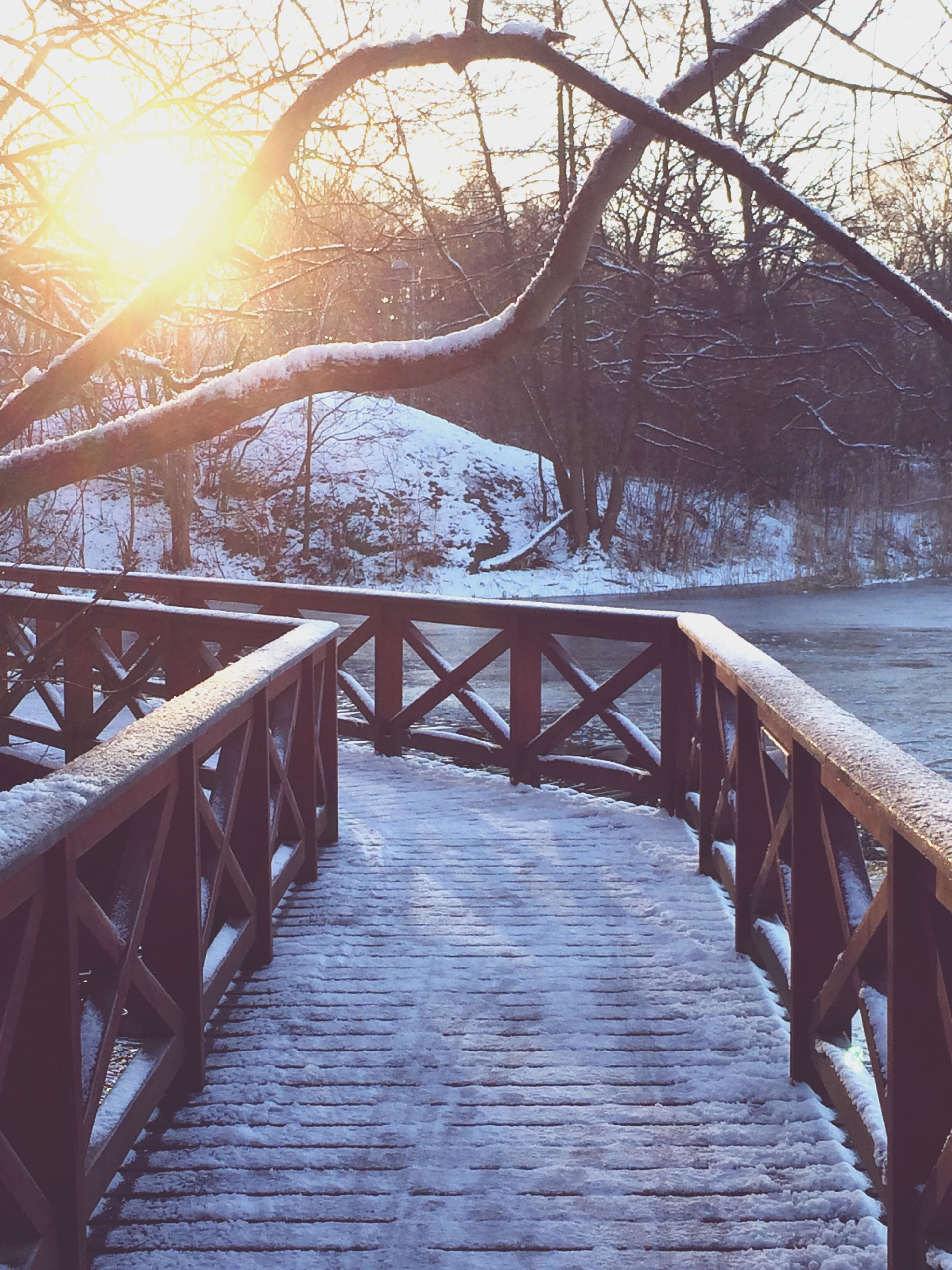 tree, railing, sunlight, the way forward, wood - material, sun, bare tree, sunbeam, branch, built structure, tranquility, nature, footbridge, water, tranquil scene, beauty in nature, sky, scenics, outdoors, boardwalk