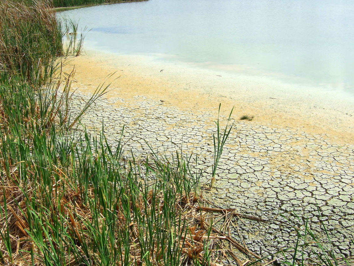 Beach Beauty In Nature Brackish Climate Change Cracked Ground Day Disappearing Drying Up Grass Growth Nature No People Outdoors Pond Receding Shoreline Scenics Tranquil Scene Tranquility Water