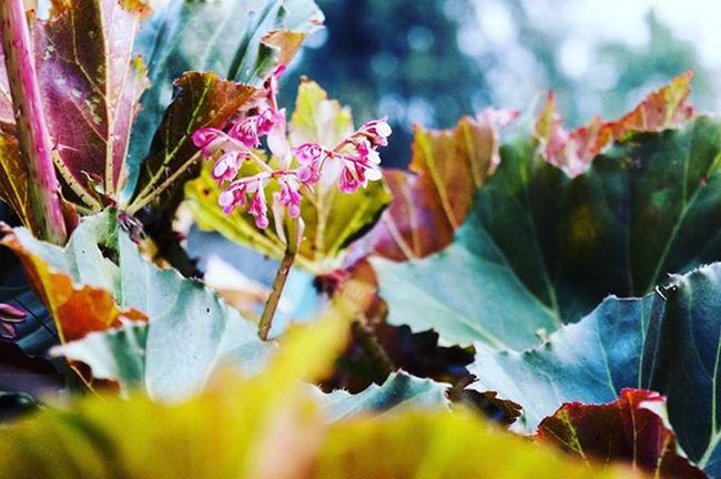 just messin' around with bokeh 📷🌸 Bokeh Macrophotography Tryingbokeh Flowers Plant Sunyday Good Morning Pink Flower