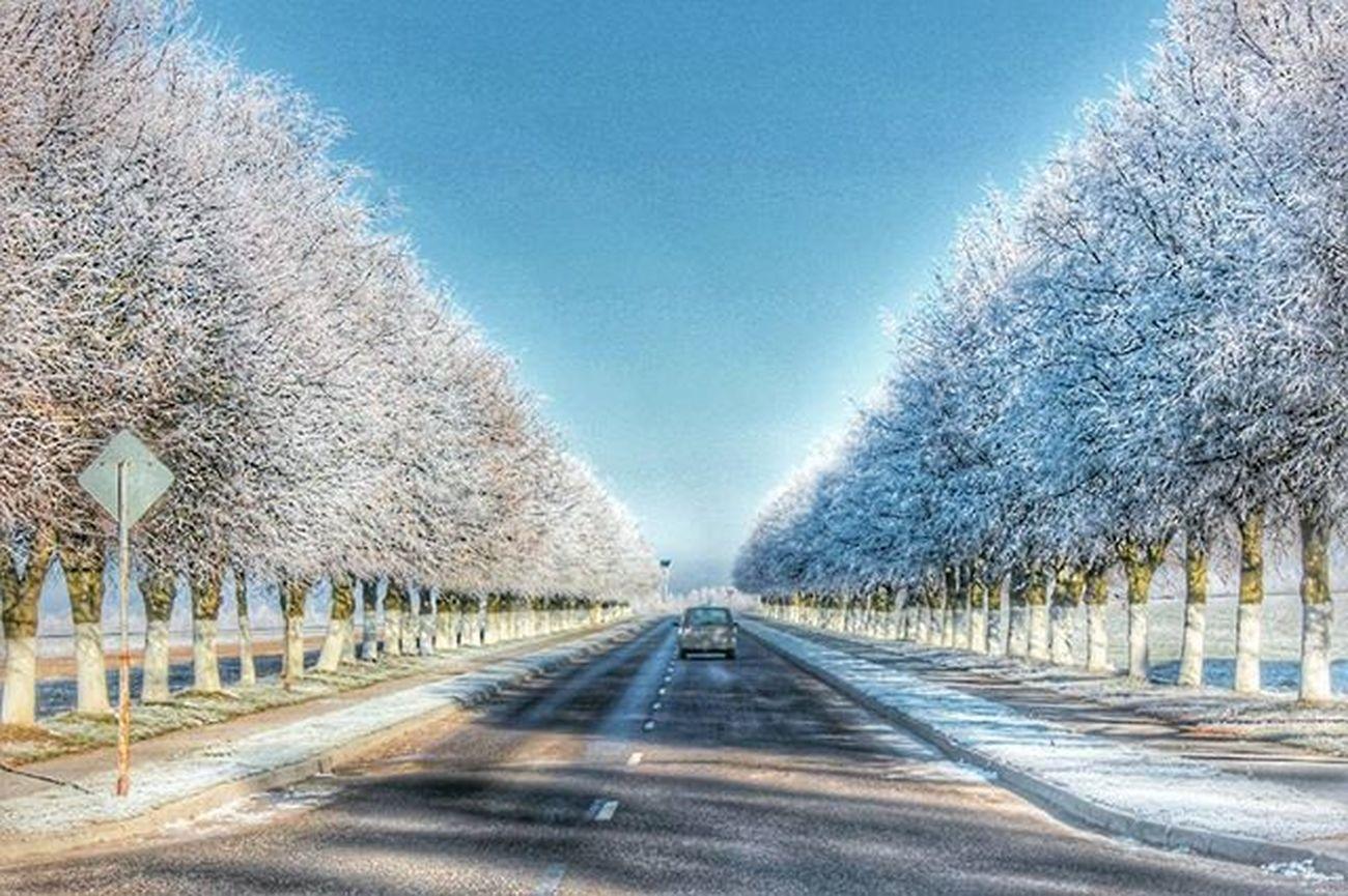 беларусь Природа зима снег Дорога снегидет январь Аллея деревья небо утро Belarus Nature Photo Lusienka_pilets Winter Canon Morning Sky Road