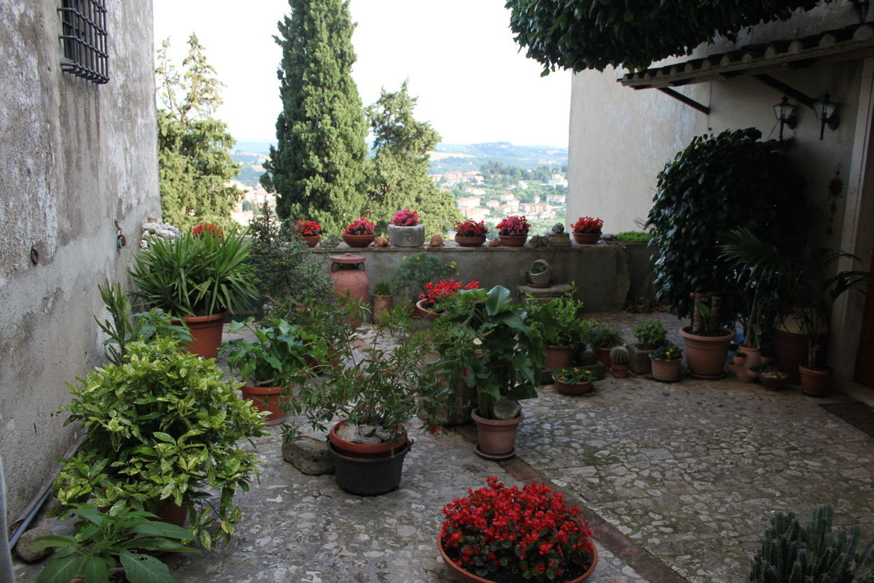 Amelia Day Flower Front Or Back Yard Italy Leaf No People Outdoors Potted Plant Terrace Gardening Tree Umbria
