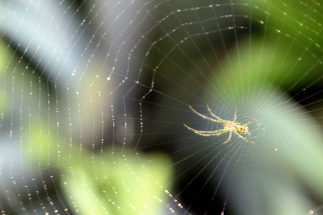 Close-up Fragility Glowing Natural Pattern Nature No People Outdoors Spider Spider Web Web