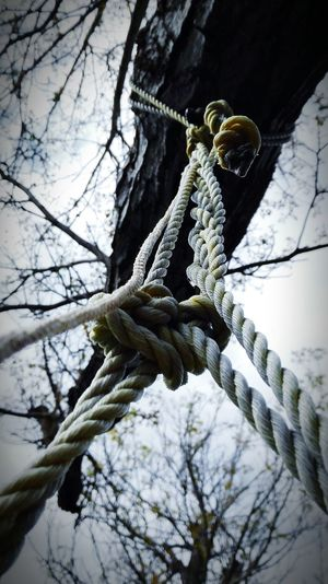 I was in my garden on a rainy day. I was swinging on a home made swing and I looked up to see this. I quickly took a picture. Branch Tree Nature Depression First Eyeem Photo