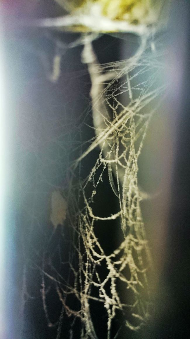 Spider Spider Web Web Light Hidden Shadow Animal Abstract