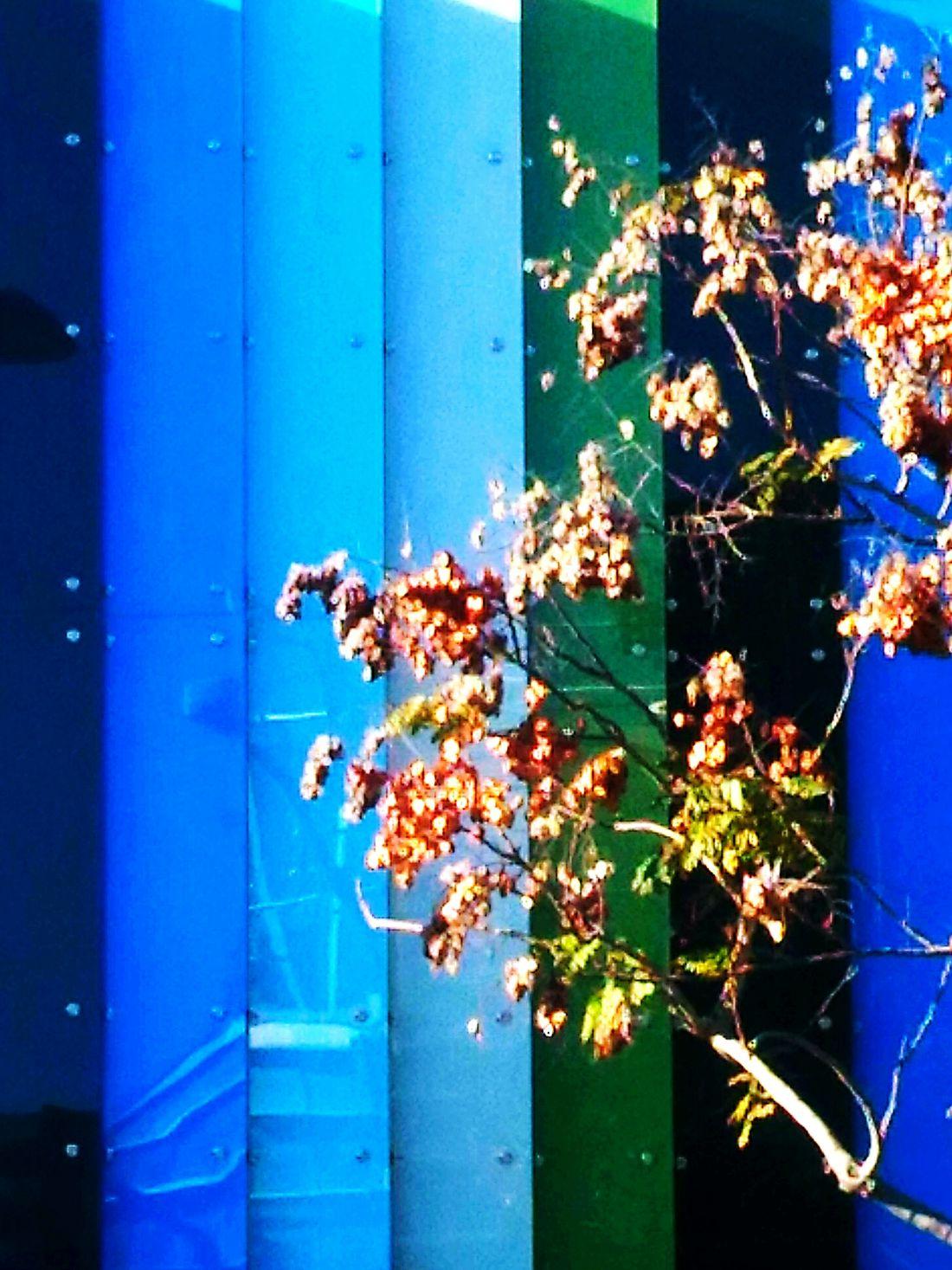 Vivid Colours  Treeofhope Treeoflight Thetreeoflife