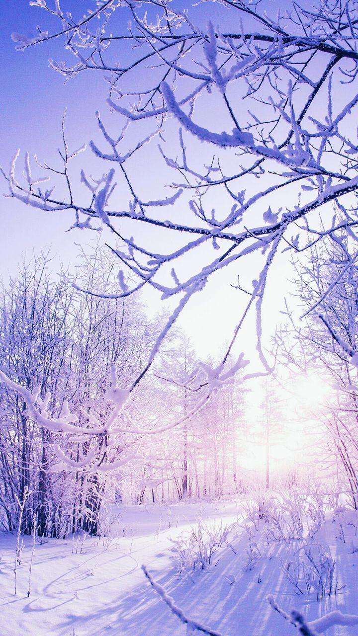 winter, cold temperature, snow, bare tree, tree, nature, beauty in nature, tranquil scene, tranquility, scenics, weather, no people, branch, day, landscape, outdoors, sky