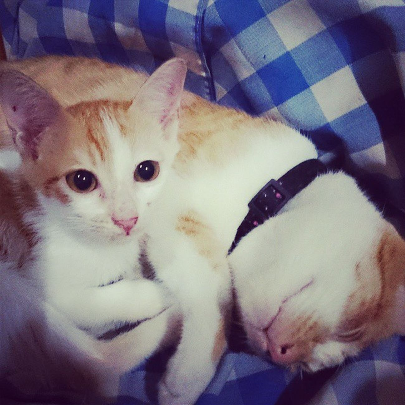BROTHERHOOD Sweetestcat SolsticeAndZoe