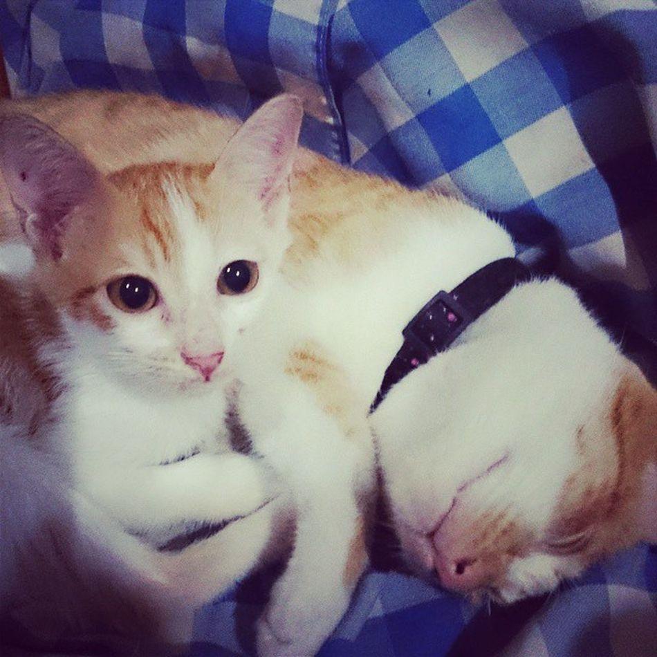 BROTHERHOOD Sweetestcat SolsticeAndZoe