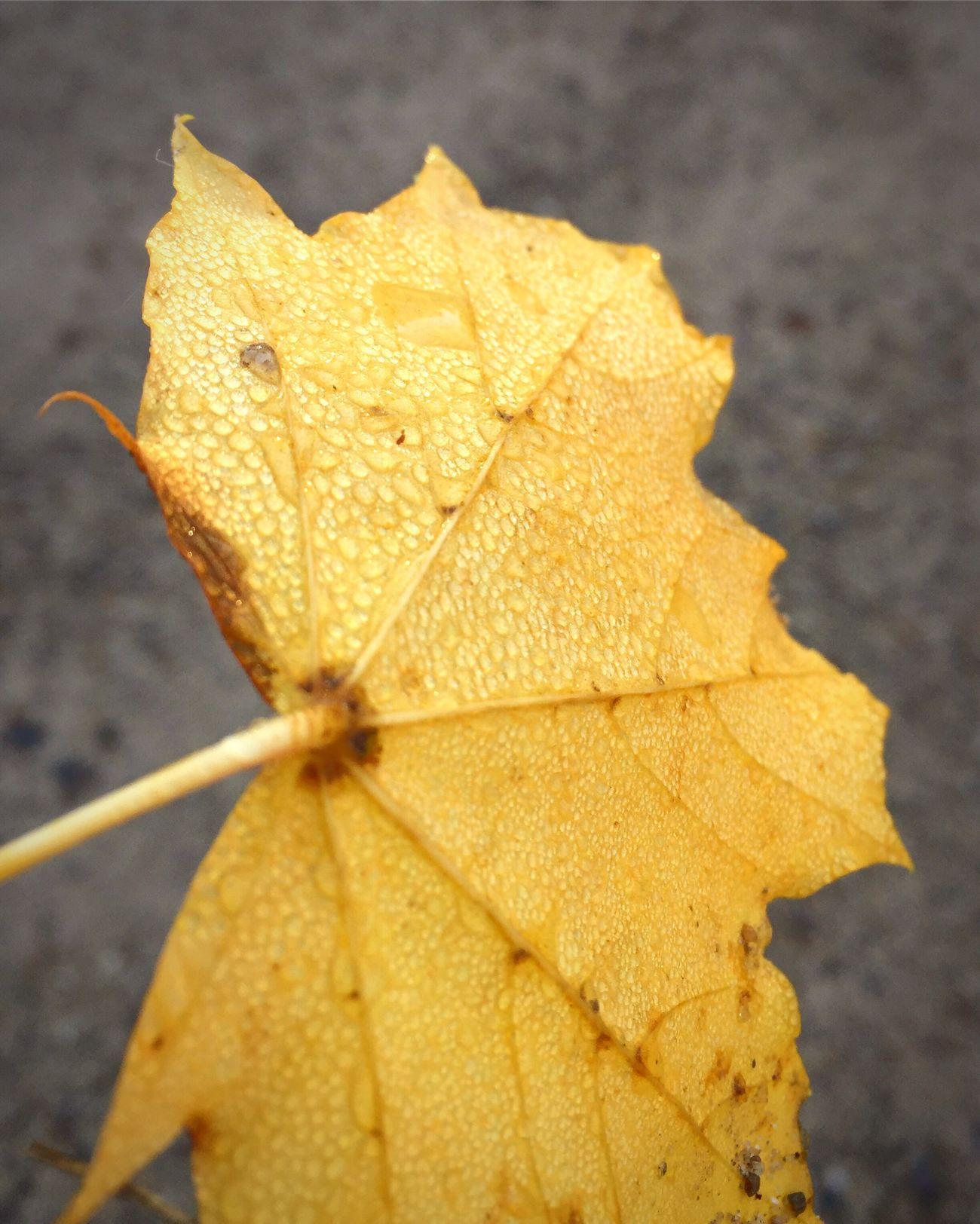 Fall Leaf Water Drops First Eyeem Photo
