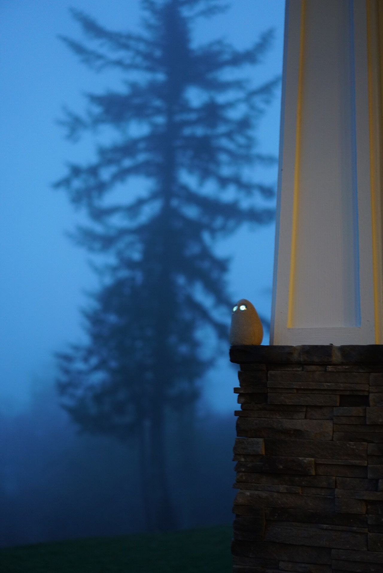 Owl Eyes Foggy Weather Just Playing New Camera Outdoors No People