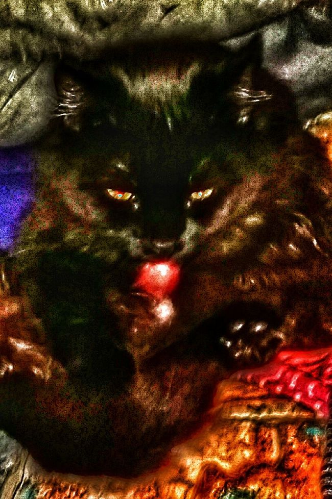 Ki(i the night lover you dont see her that often Domestic Animals One Animal Animal Themes Domestic Cat Special Effects Black Cat Head Shot Cat Black My Love Black Cat Photography For The Love Of Photography Black Color