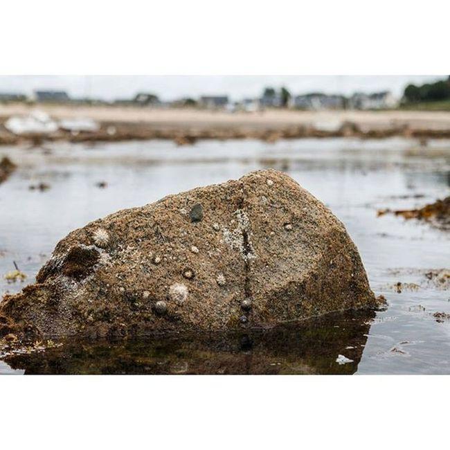 Low tide in L' Armor Pleubian Tide Tides Rocks Rock Water Coast Shell Ebbe Fels Gezeiten Pleubian Larmorpleubian Sillondetalbert Brittany Bretagne France