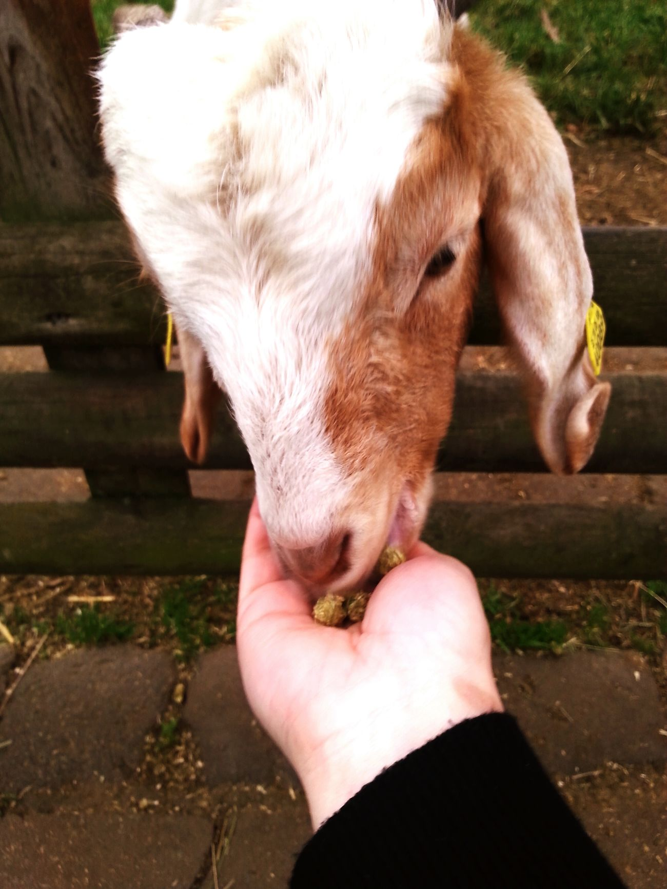 Feeding goats and sheep 🐑🐐 Walking Around Autumn Animals Animal_collection Enjoying Life Taking Photos Cheese!